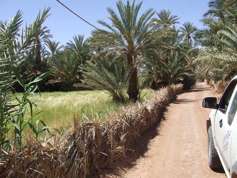 Maroc 04 03
